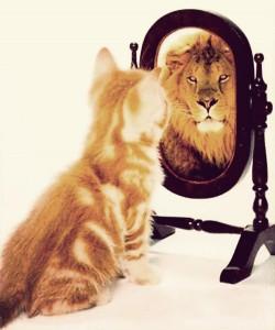 Kat die een tijger als spiegelbeeld ziet