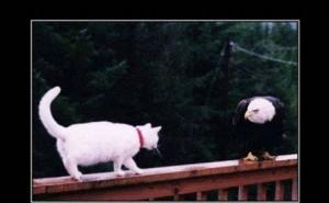 Kat die op balkje loopt